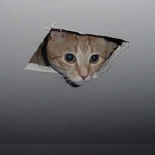 Cat that became of meme by peering through the ceiling square