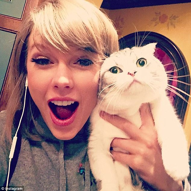 Scottish fold cats are known for their adorable floppy ears and prominent whiskers that make it look like they are smiling. Taylor Swift, pictured above left, has one named Olivia Benson