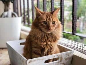 Tabby cat sitting in a crate