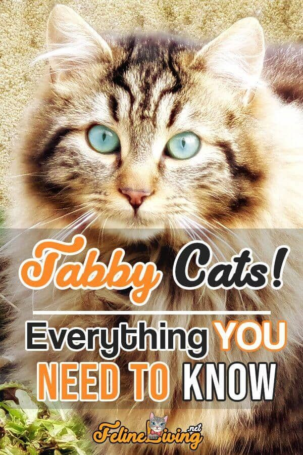 poster of Tabby cat with text