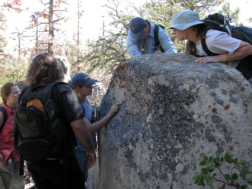 group of botanists looking at lichens on a boulder.