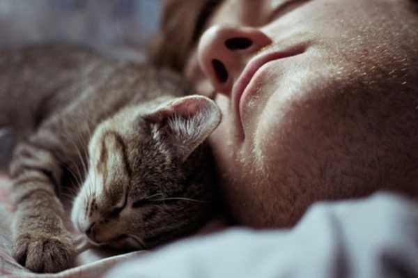 Почему кот спит в определенных местах. Почему кошки любят спать на людях: все объяснения от логических до суеверных